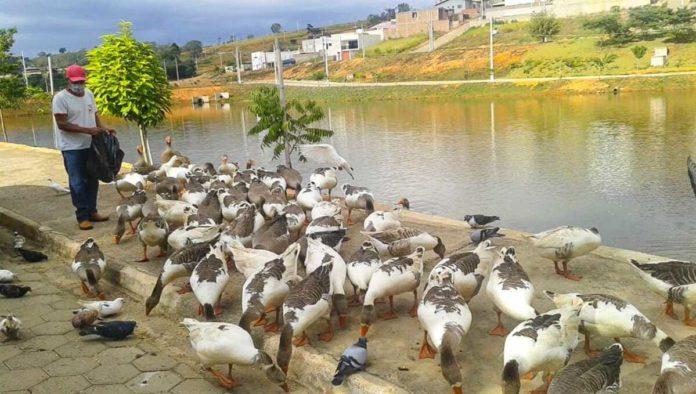Funcionário da prefeitura alimentando os patos